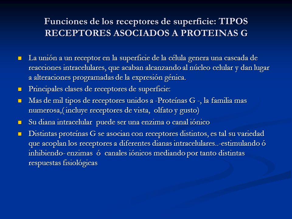 Funciones de los receptores de superficie: TIPOS RECEPTORES ASOCIADOS A PROTEINAS G La unión a un receptor en la superficie de la célula genera una ca