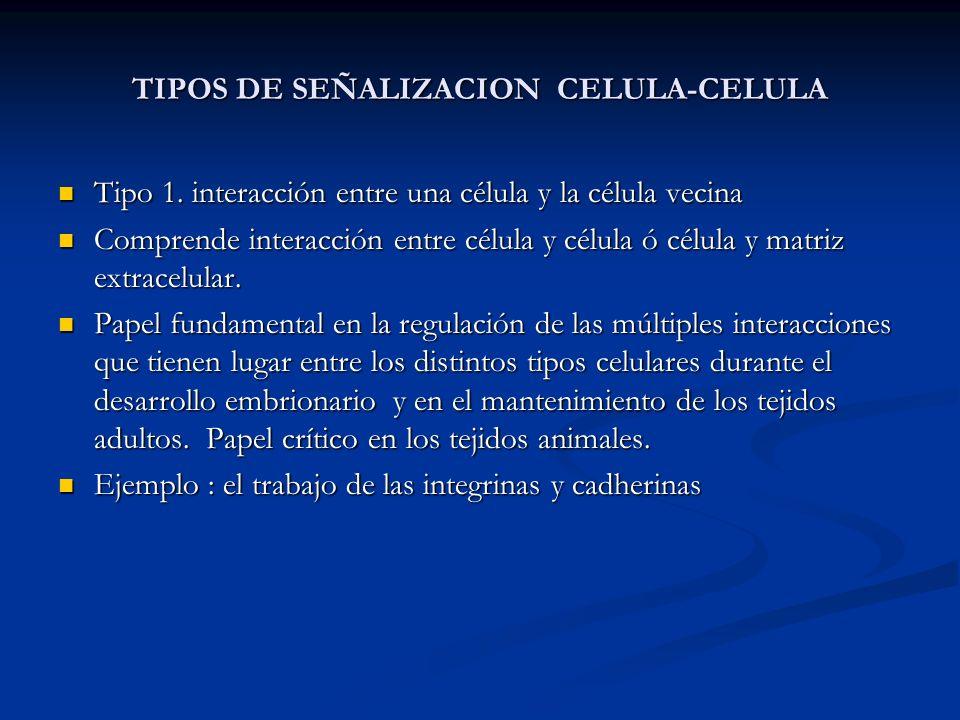 TIPOS DE SEÑALIZACION CELULA-CELULA Tipo 1. interacción entre una célula y la célula vecina Tipo 1. interacción entre una célula y la célula vecina Co