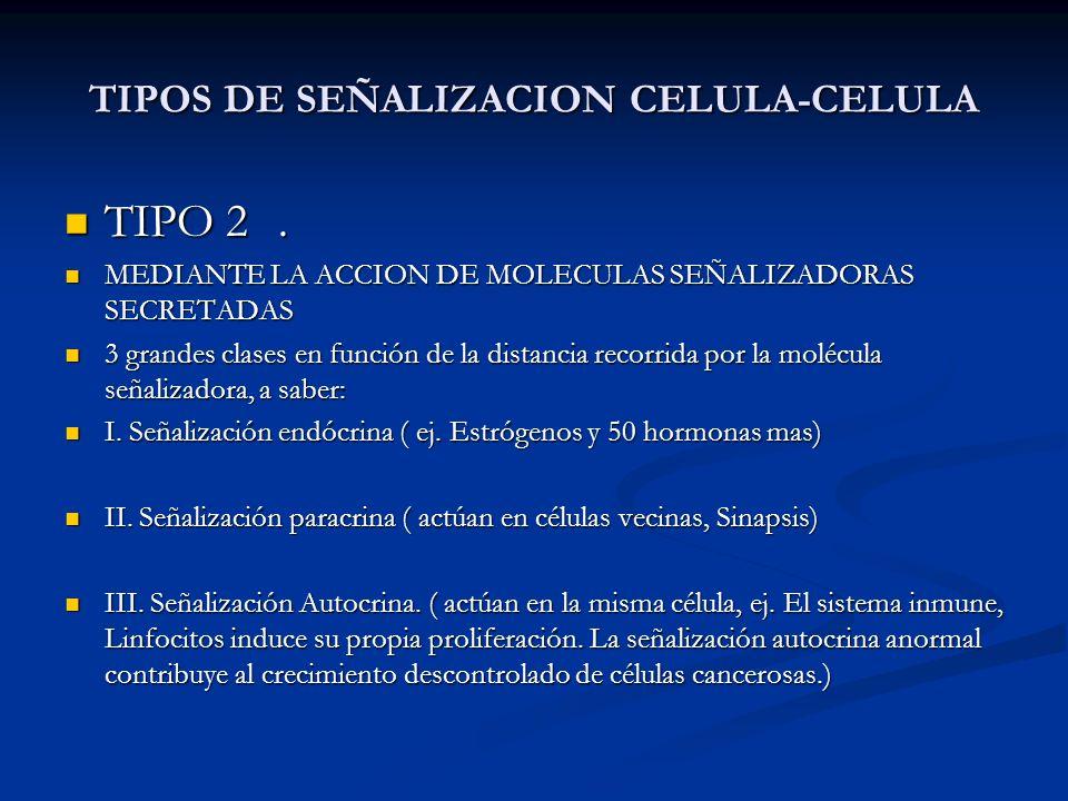 TIPOS DE SEÑALIZACION CELULA-CELULA TIPO 2. TIPO 2. MEDIANTE LA ACCION DE MOLECULAS SEÑALIZADORAS SECRETADAS MEDIANTE LA ACCION DE MOLECULAS SEÑALIZAD