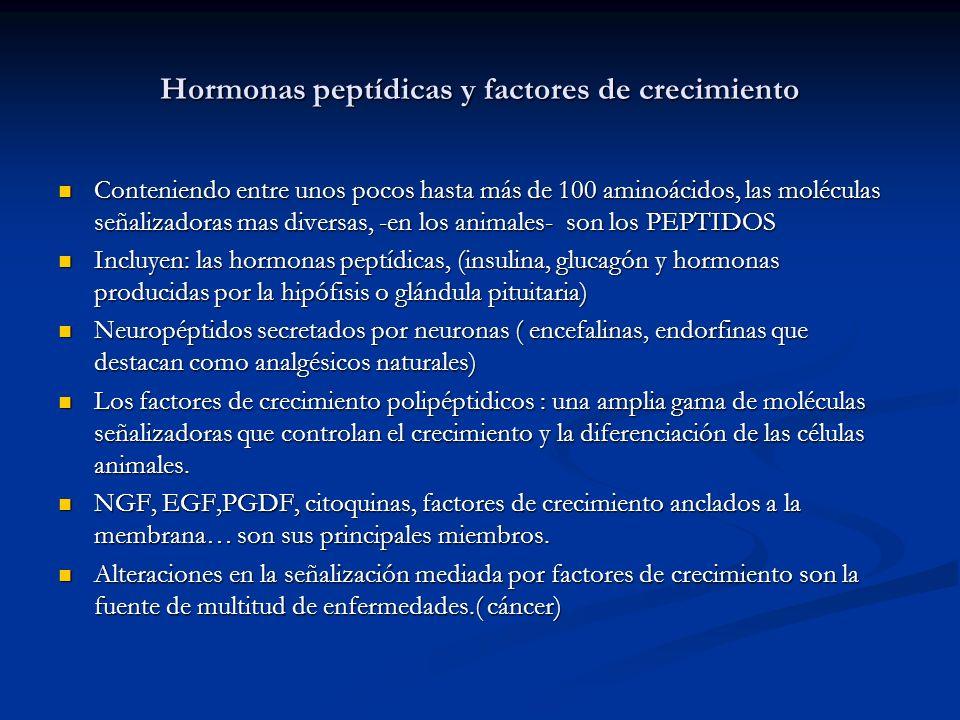 Hormonas peptídicas y factores de crecimiento Conteniendo entre unos pocos hasta más de 100 aminoácidos, las moléculas señalizadoras mas diversas, -en