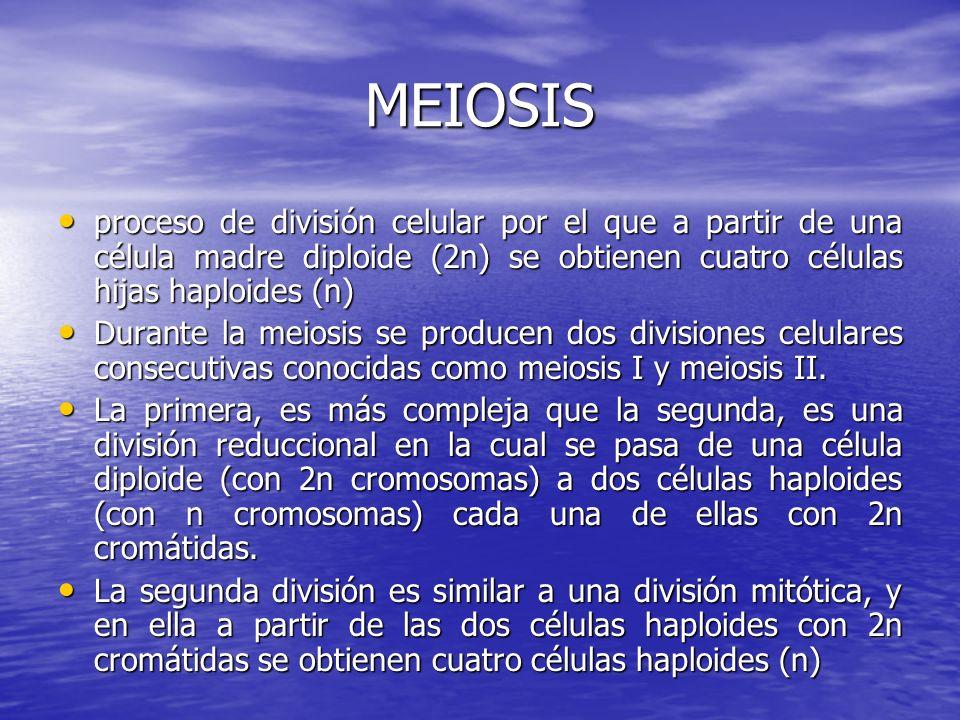 MEIOSIS proceso de división celular por el que a partir de una célula madre diploide (2n) se obtienen cuatro células hijas haploides (n) proceso de di