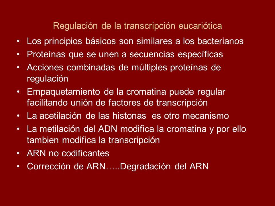 Regulación de la transcripción eucariótica Los principios básicos son similares a los bacterianos Proteínas que se unen a secuencias específicas Accio