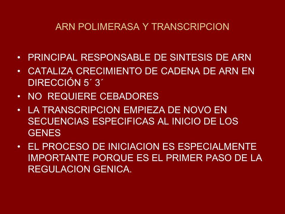 ARN POLIMERASA Y TRANSCRIPCION PRINCIPAL RESPONSABLE DE SINTESIS DE ARN CATALIZA CRECIMIENTO DE CADENA DE ARN EN DIRECCIÓN 5´ 3´ NO REQUIERE CEBADORES