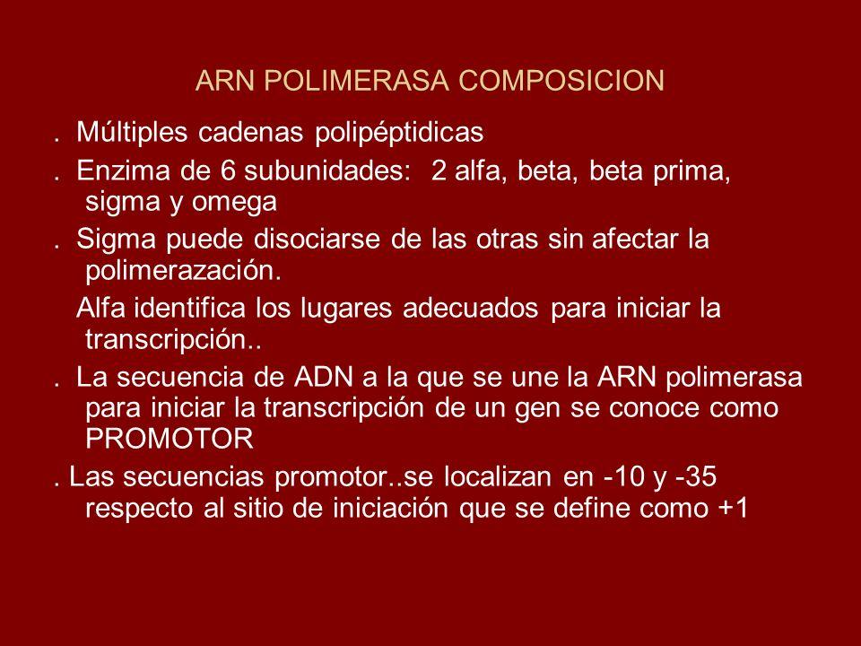 ARN POLIMERASA COMPOSICION. Múltiples cadenas polipéptidicas. Enzima de 6 subunidades: 2 alfa, beta, beta prima, sigma y omega. Sigma puede disociarse