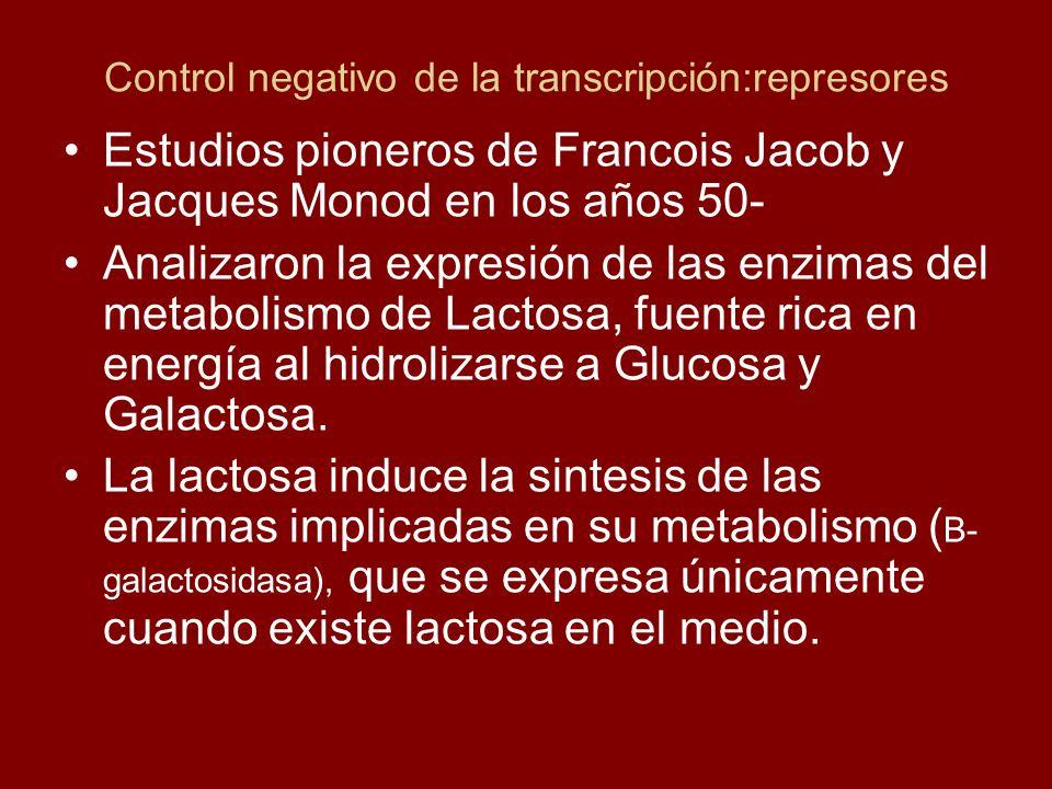 Control negativo de la transcripción:represores Estudios pioneros de Francois Jacob y Jacques Monod en los años 50- Analizaron la expresión de las enz