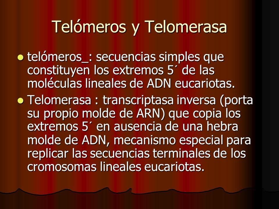 Telómeros y Telomerasa telómeros_: secuencias simples que constituyen los extremos 5´ de las moléculas lineales de ADN eucariotas. telómeros_: secuenc