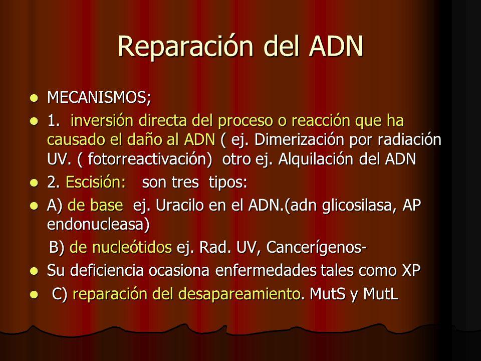 Reparación del ADN MECANISMOS; MECANISMOS; 1. inversión directa del proceso o reacción que ha causado el daño al ADN ( ej. Dimerización por radiación