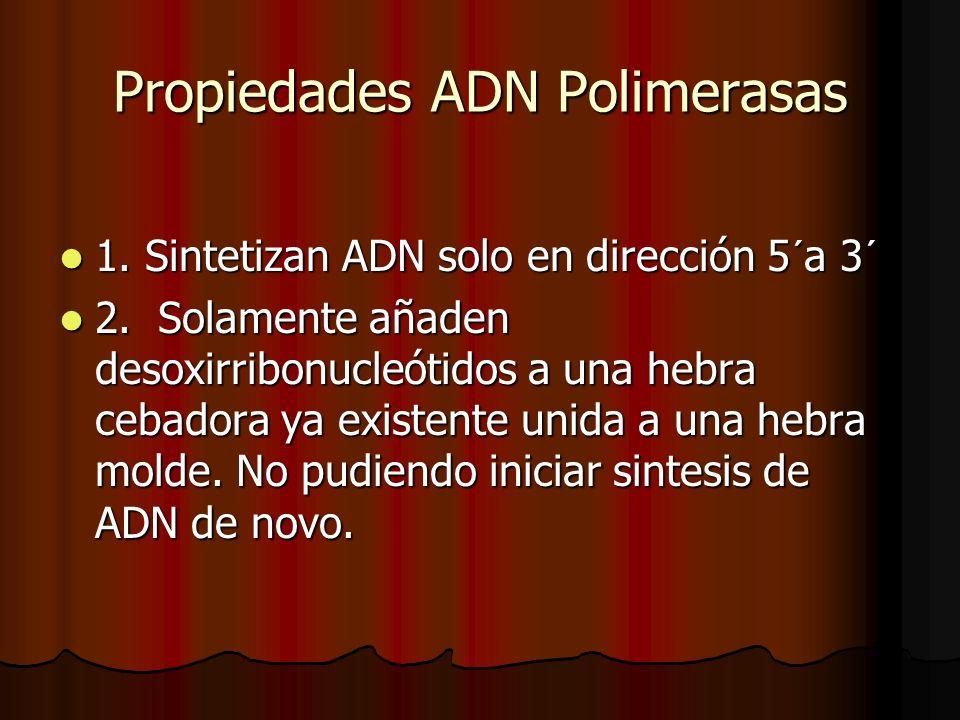 Propiedades ADN Polimerasas 1. Sintetizan ADN solo en dirección 5´a 3´ 1. Sintetizan ADN solo en dirección 5´a 3´ 2. Solamente añaden desoxirribonucle