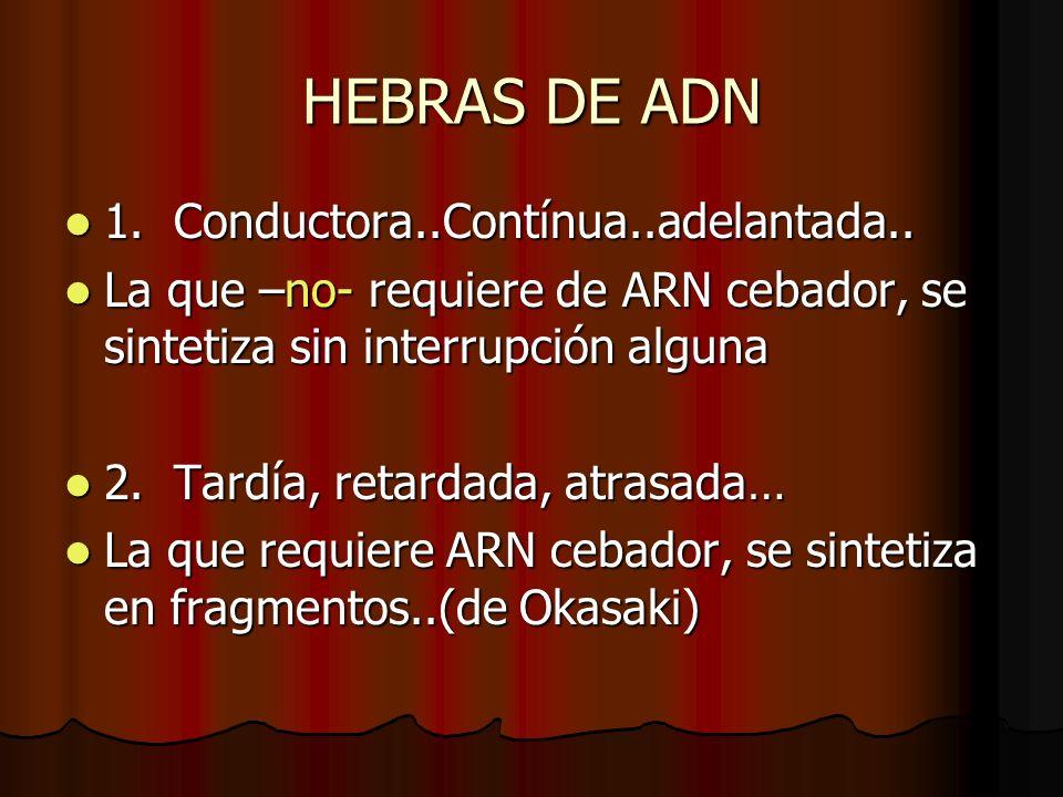 HEBRAS DE ADN 1. Conductora..Contínua..adelantada.. 1. Conductora..Contínua..adelantada.. La que –no- requiere de ARN cebador, se sintetiza sin interr