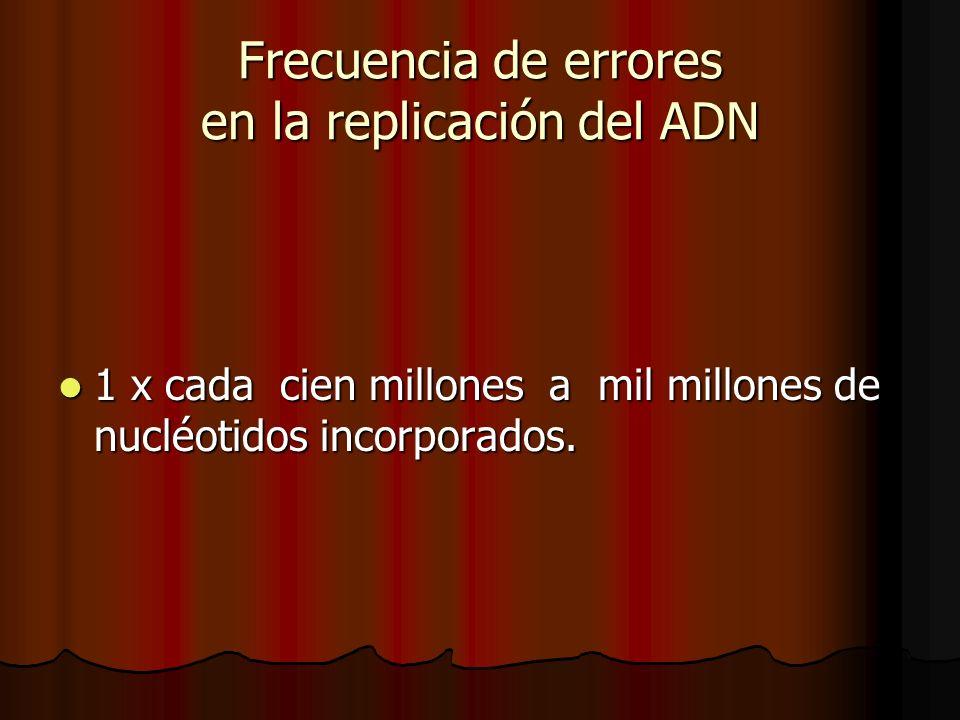 Frecuencia de errores en la replicación del ADN 1 x cada cien millones a mil millones de nucléotidos incorporados. 1 x cada cien millones a mil millon