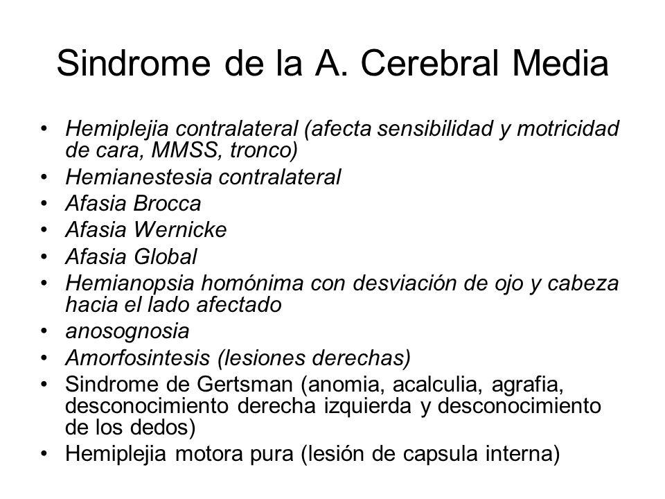 Sindrome de la A. Cerebral Media Hemiplejia contralateral (afecta sensibilidad y motricidad de cara, MMSS, tronco) Hemianestesia contralateral Afasia
