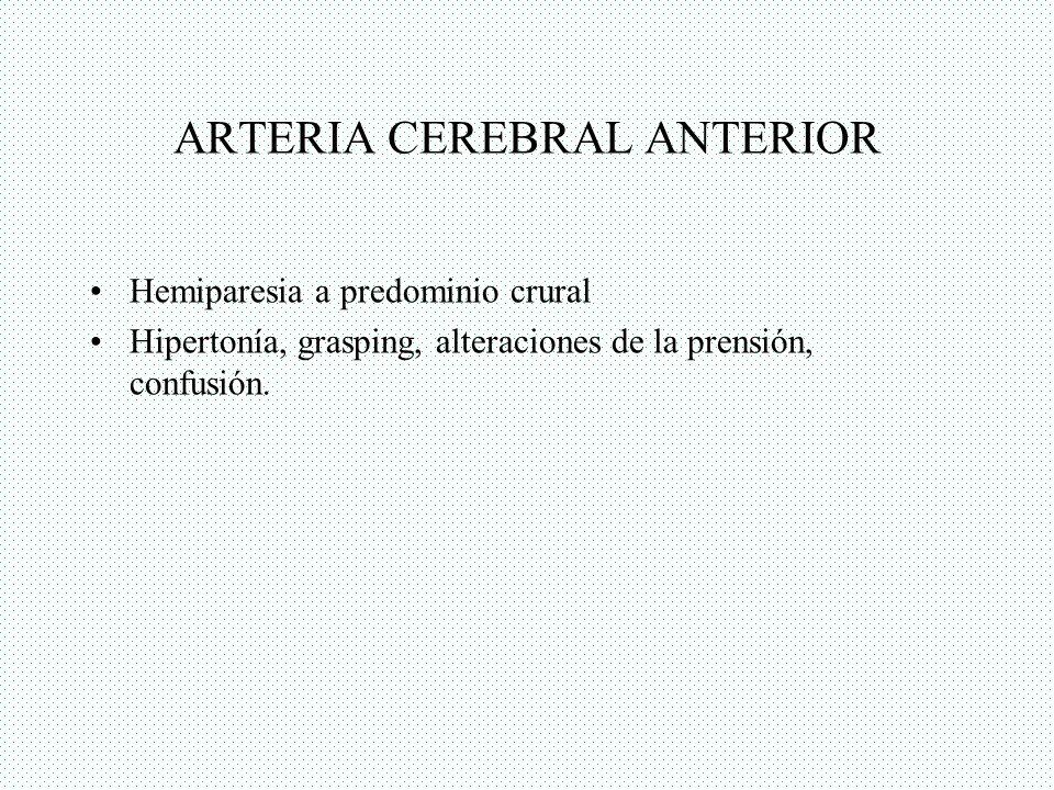 ARTERIA CEREBRAL ANTERIOR Hemiparesia a predominio crural Hipertonía, grasping, alteraciones de la prensión, confusión.
