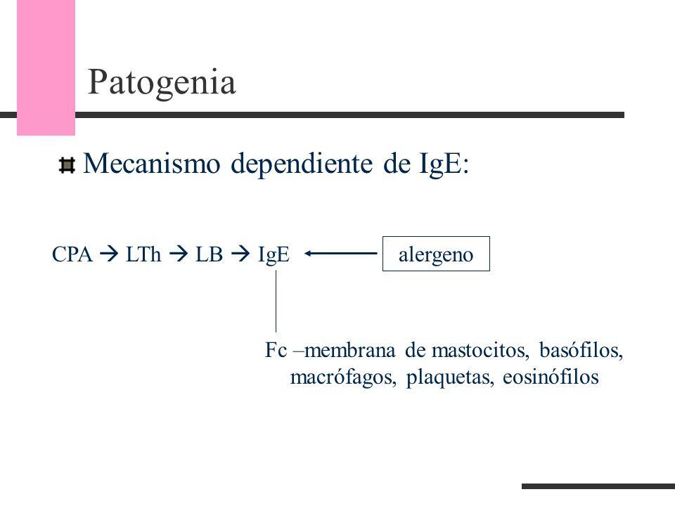 Patogenia Mecanismo dependiente de IgE: CPA LTh LB IgE Fc –membrana de mastocitos, basófilos, macrófagos, plaquetas, eosinófilos alergeno