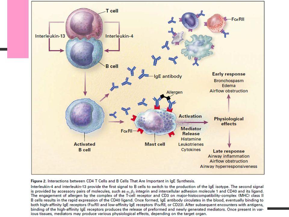 Patogenia Mecanismo independiente de IgE: eosinófilos Proteínas catiónicas, radicales de O2, mediadores lipídicos (PGs, Tx, leucotrienos, factor activador plaquetario) Descamación de epitelios, proliferación de fibroblastos, secreción de moco.extravasación vascular, contracción músculo liso, secreción glandular Ag Linfocitos IL5