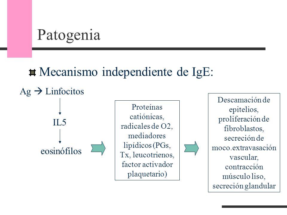 Patogenia Mecanismo independiente de IgE: eosinófilos Proteínas catiónicas, radicales de O2, mediadores lipídicos (PGs, Tx, leucotrienos, factor activ