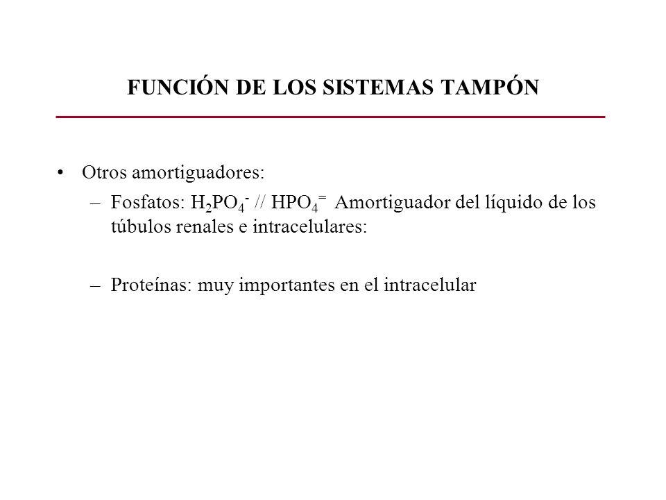 FUNCIÓN DE LOS SISTEMAS TAMPÓN Otros amortiguadores: –Fosfatos: H 2 PO 4 - // HPO 4 = Amortiguador del líquido de los túbulos renales e intracelulares