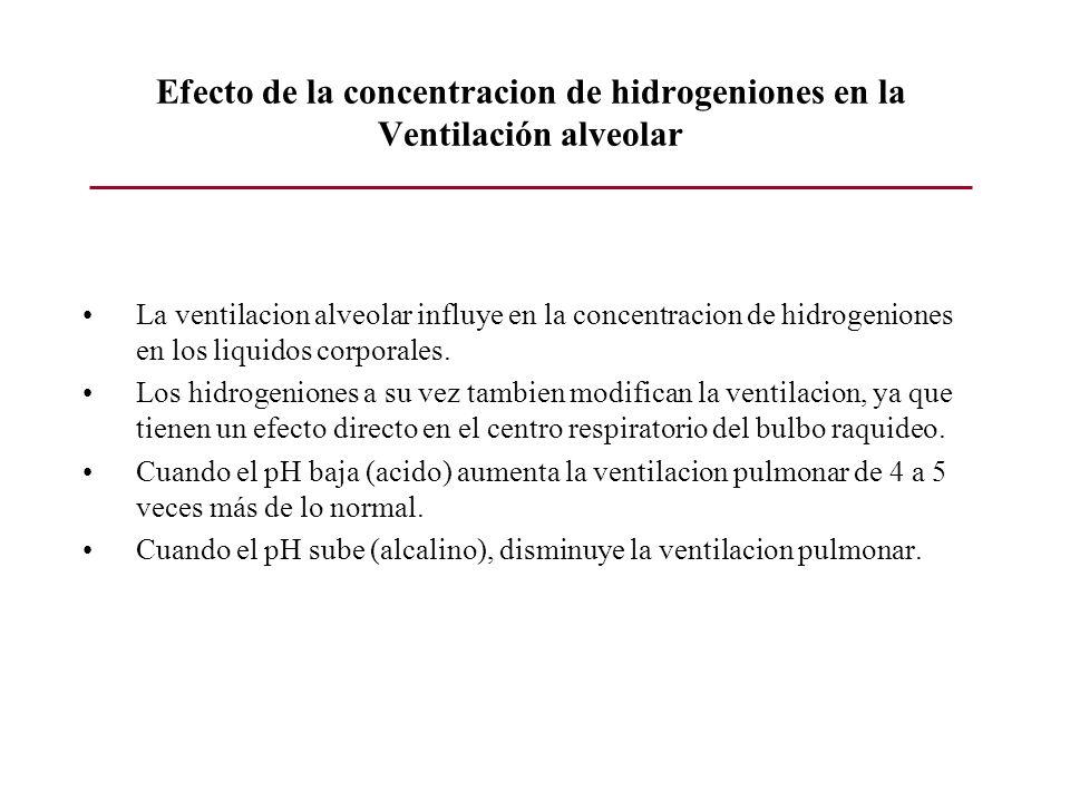 Efecto de la concentracion de hidrogeniones en la Ventilación alveolar La ventilacion alveolar influye en la concentracion de hidrogeniones en los liq