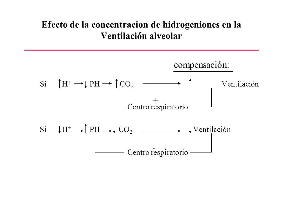 Efecto de la concentracion de hidrogeniones en la Ventilación alveolar Si H + PH CO 2 Ventilación Centro respiratorio Si H + PH CO 2 Ventilación Centr