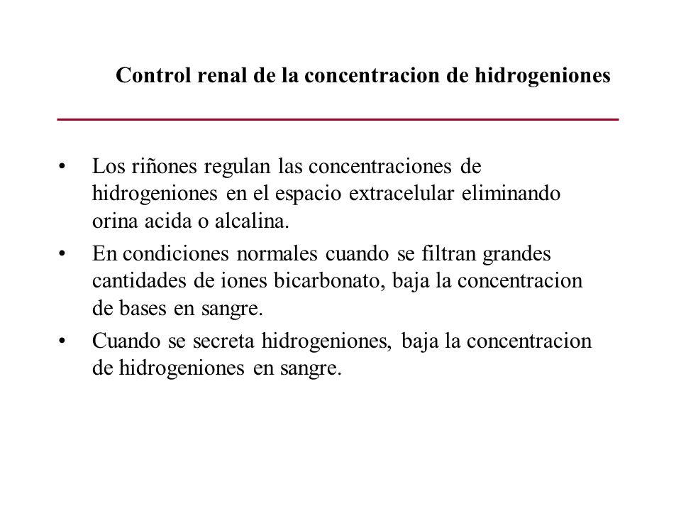 Control renal de la concentracion de hidrogeniones Los riñones regulan las concentraciones de hidrogeniones en el espacio extracelular eliminando orin