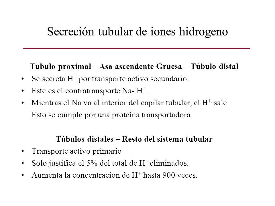 Secreción tubular de iones hidrogeno Tubulo proximal – Asa ascendente Gruesa – Túbulo distal Se secreta H + por transporte activo secundario. Este es
