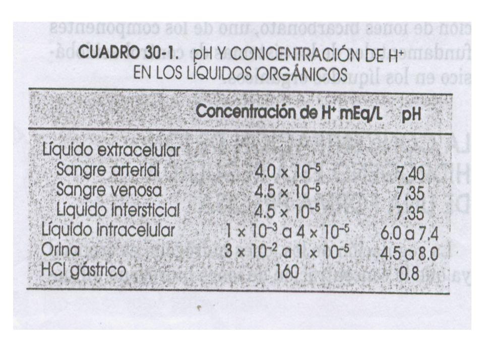 Reabsorción del 85% HCO3- HCO3- 4320 mEq/d REABSORCION DE BICARBONATO Reabsorción del 10% HCO3- Reabsorción del >4.9% HCO3-