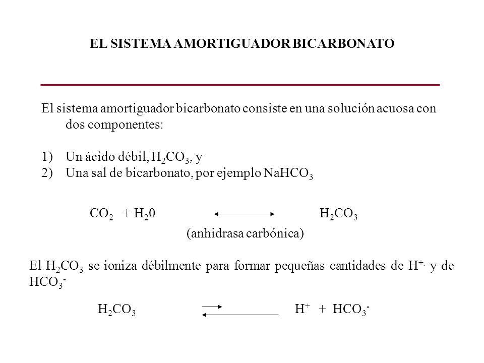 Secreción de H + Reabsorción de bicarbonato TUBULO PROXIMAL LUZ TUBULAR CELULA SANGRE LUZ TUBULAR CELULA SANGRE ATP NaNa K A C H 2 CO 3 H 2 O CO 2 H 2 CO 3 HCO 3 HCO 3 Na HCO 3 HCO 3 + Na HCO 3 + H H+H+ AC AC