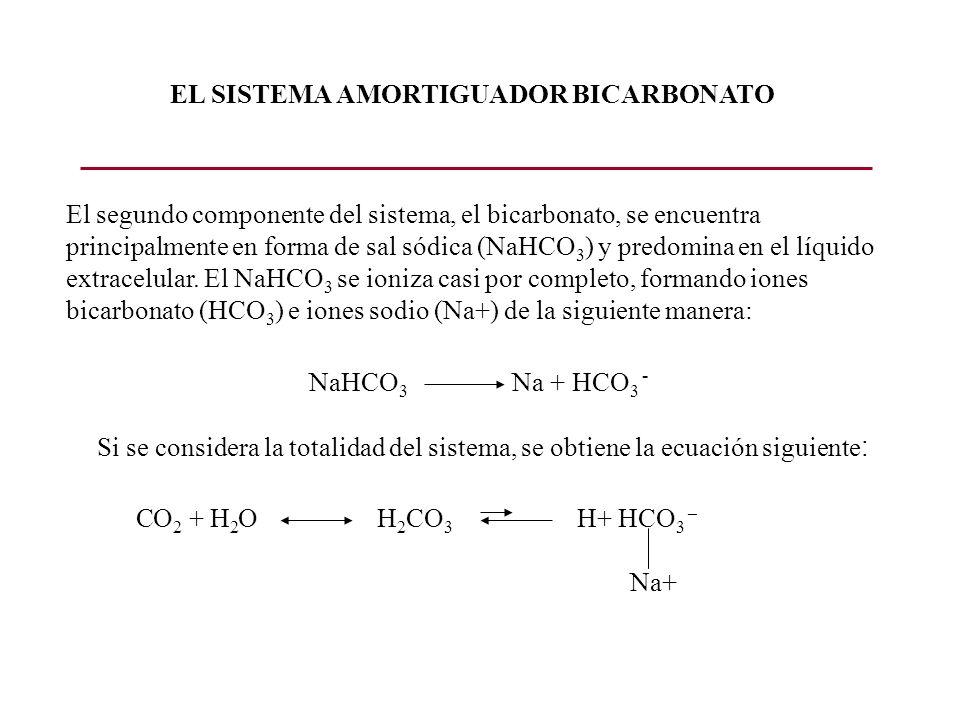 El segundo componente del sistema, el bicarbonato, se encuentra principalmente en forma de sal sódica (NaHCO 3 ) y predomina en el líquido extracelula