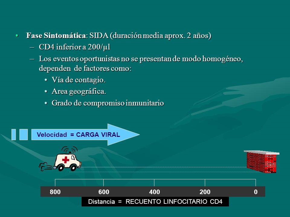 Fase Sintomática: SIDA (duración media aprox. 2 años)Fase Sintomática: SIDA (duración media aprox. 2 años) –CD4 inferior a 200/µl –Los eventos oportun