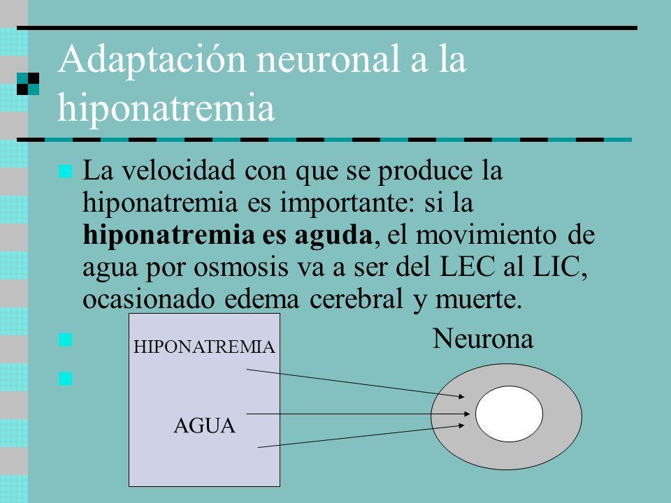Adaptación neuronal a la hiponatremia La velocidad con que se produce la hiponatremia es importante: si la hiponatremia es aguda, el movimiento de agua por osmosis va a ser del LEC al LIC, ocasionado edema cerebral y muerte.