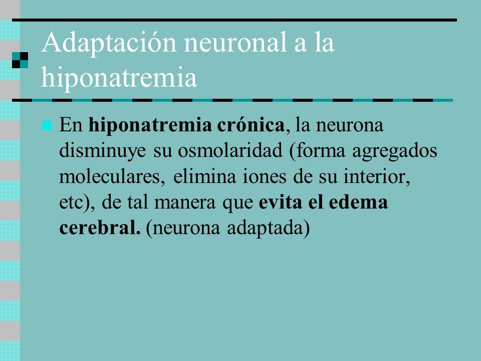 Adaptación neuronal a la hiponatremia En hiponatremia crónica, la neurona disminuye su osmolaridad (forma agregados moleculares, elimina iones de su interior, etc), de tal manera que evita el edema cerebral.