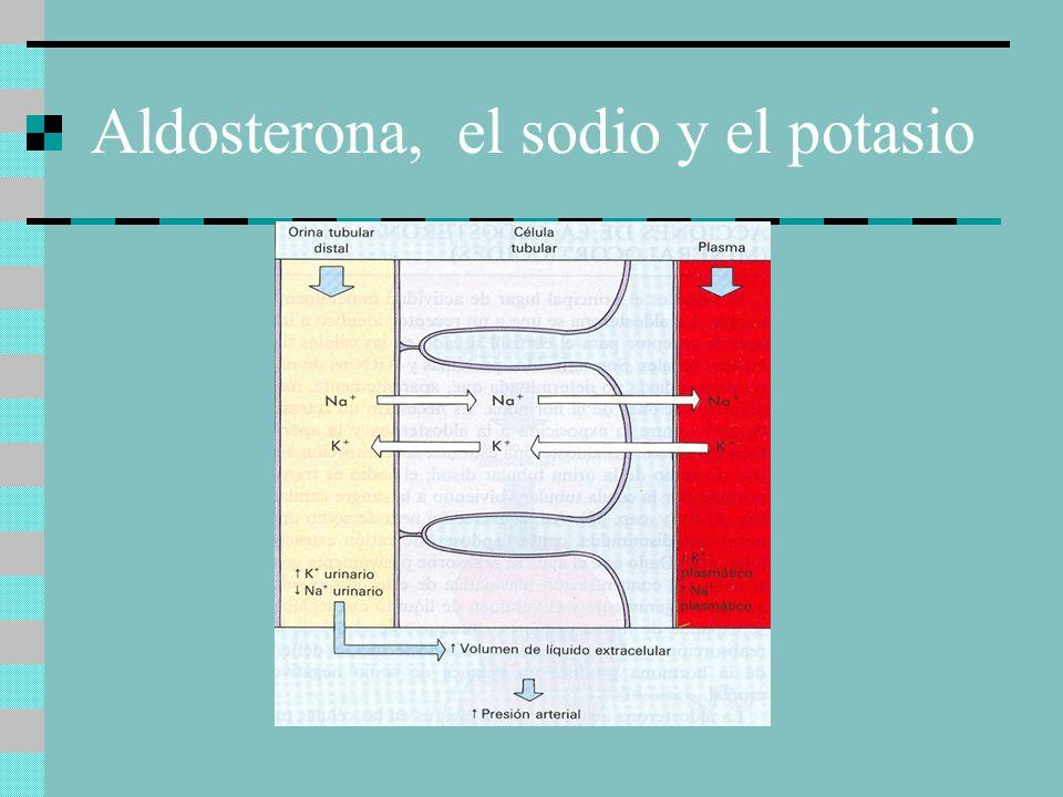 Aldosterona, el sodio y el potasio