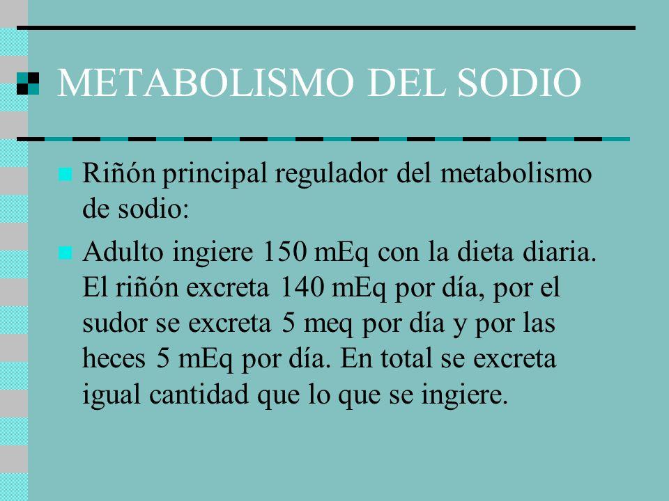METABOLISMO DEL SODIO Riñón principal regulador del metabolismo de sodio: Adulto ingiere 150 mEq con la dieta diaria. El riñón excreta 140 mEq por día