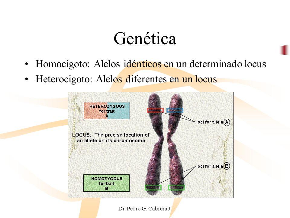 Dr. Pedro G. Cabrera J. Homocigoto: Alelos idénticos en un determinado locus Heterocigoto: Alelos diferentes en un locus Genética