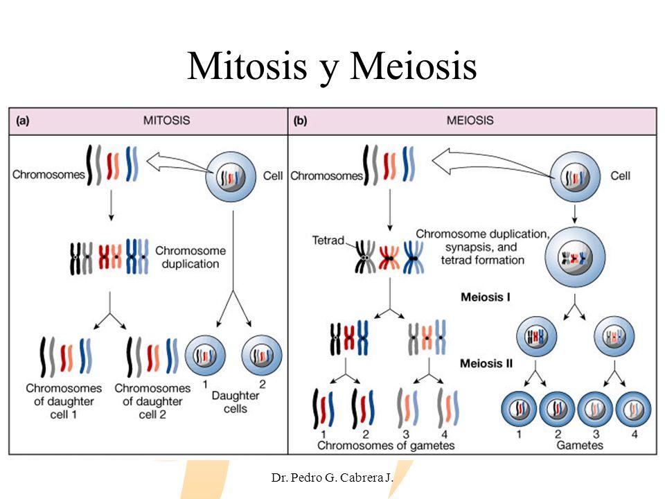 Dr. Pedro G. Cabrera J. Mitosis y Meiosis