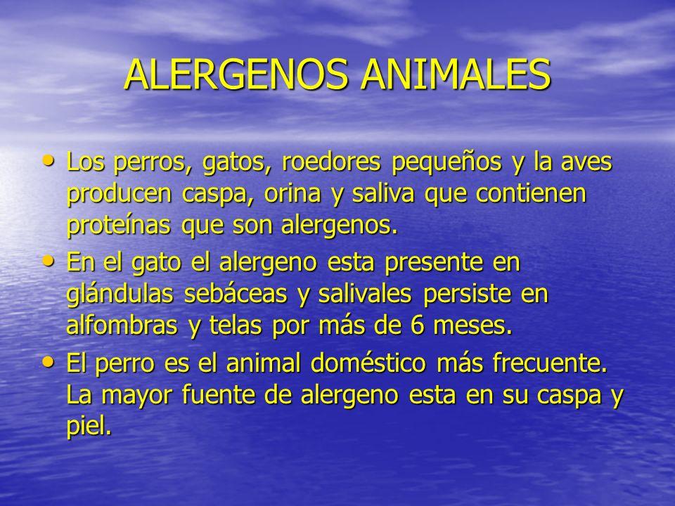 ALERGENOS ANIMALES Los perros, gatos, roedores pequeños y la aves producen caspa, orina y saliva que contienen proteínas que son alergenos. Los perros