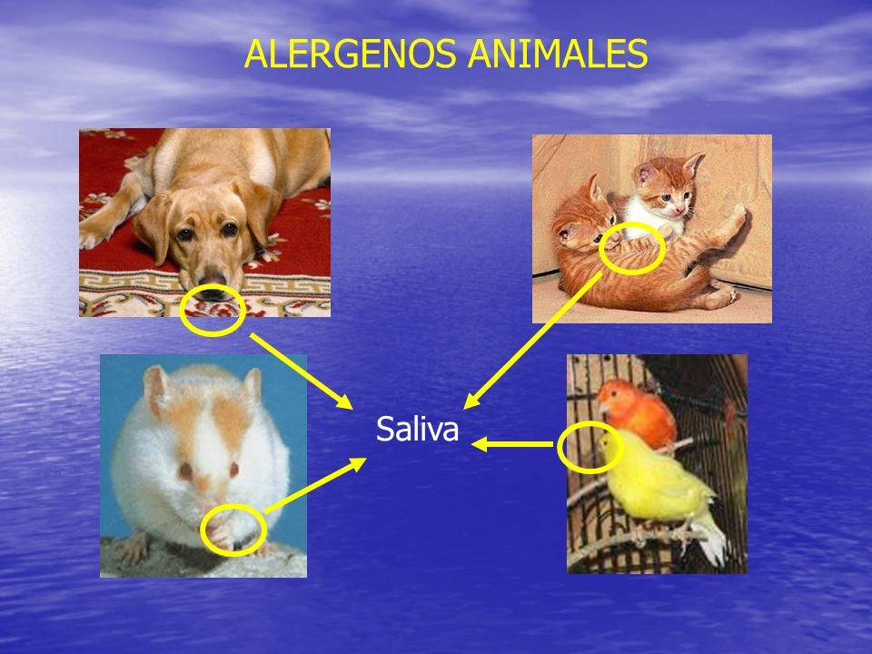 ALERGENOS ANIMALES Saliva