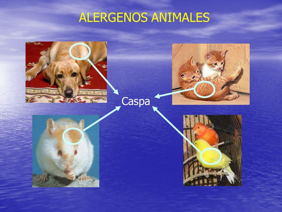 ALERGENOS ANIMALES Caspa