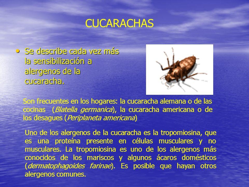 Se describe cada vez más la sensibilización a alergenos de la cucaracha. Se describe cada vez más la sensibilización a alergenos de la cucaracha. CUCA