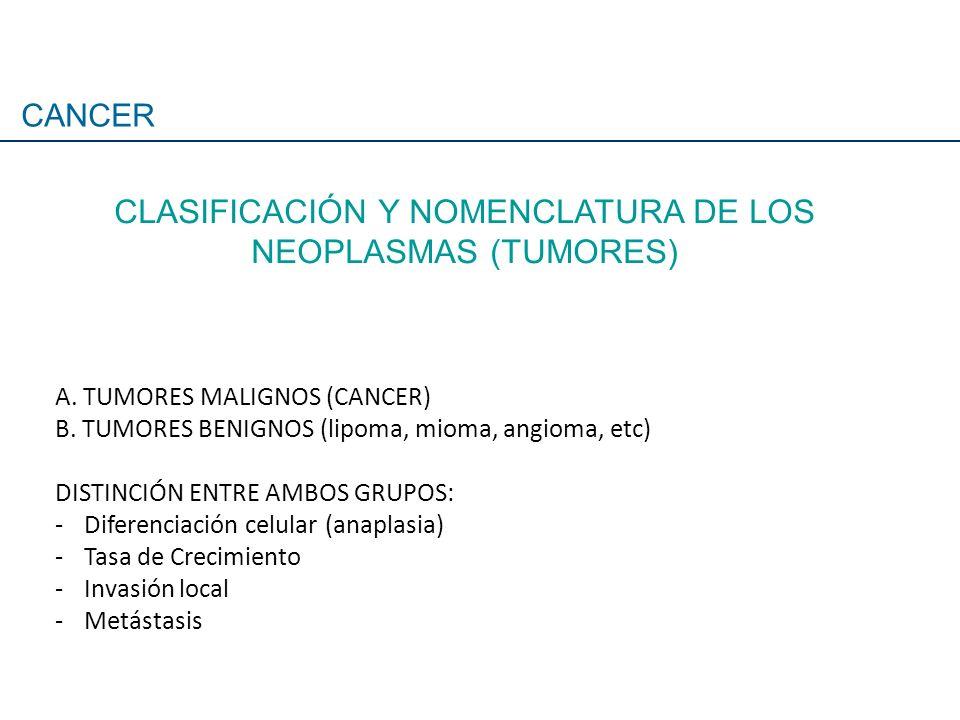 A. TUMORES MALIGNOS (CANCER) B. TUMORES BENIGNOS (lipoma, mioma, angioma, etc) DISTINCIÓN ENTRE AMBOS GRUPOS: -Diferenciación celular (anaplasia) -Tas