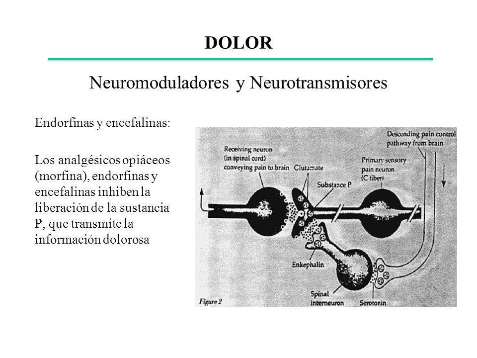 Neuromoduladores y Neurotransmisores Endorfinas y encefalinas: Los analgésicos opiáceos (morfina), endorfinas y encefalinas inhiben la liberación de l