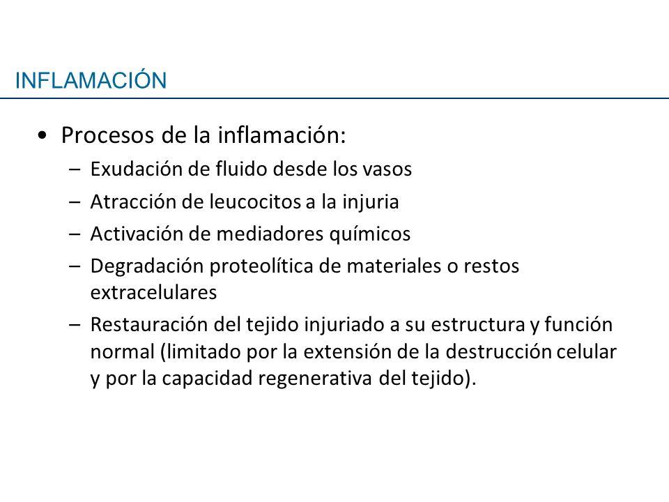 Procesos de la inflamación: –Exudación de fluido desde los vasos –Atracción de leucocitos a la injuria –Activación de mediadores químicos –Degradación