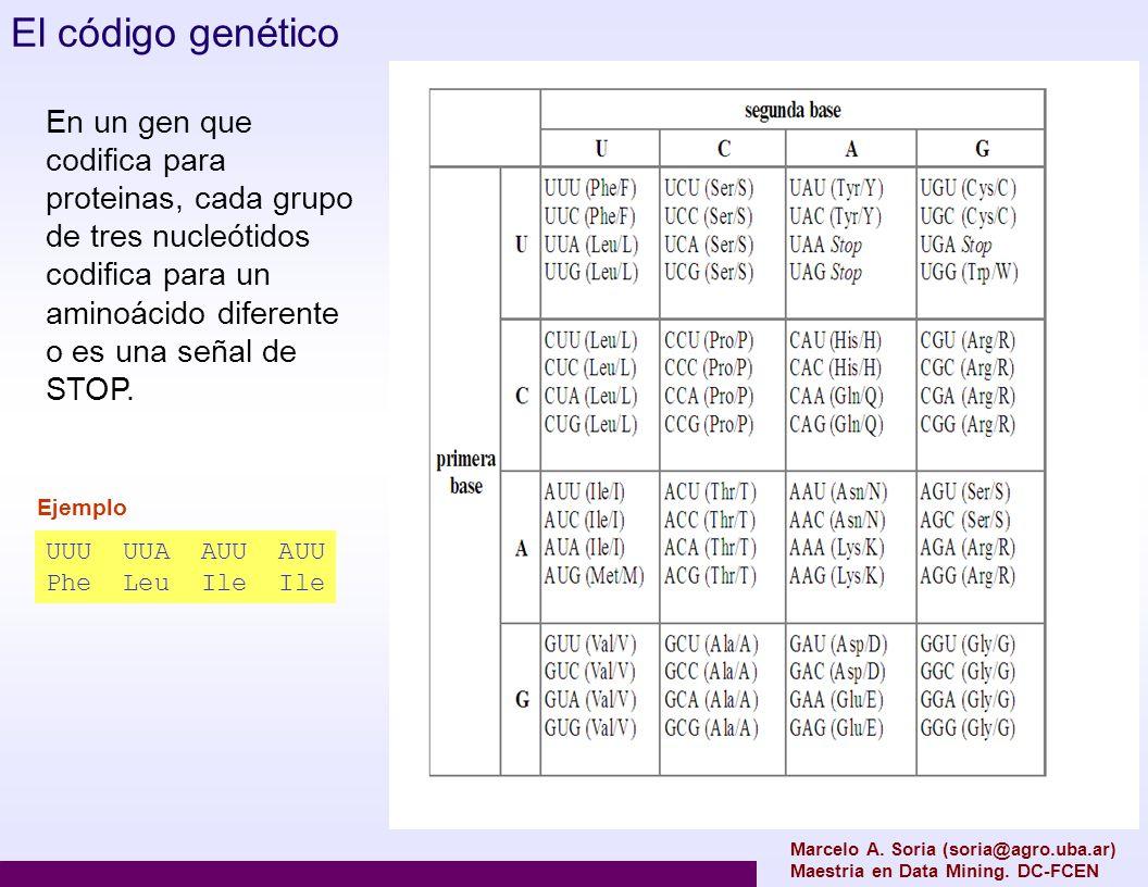 El código genético En un gen que codifica para proteinas, cada grupo de tres nucleótidos codifica para un aminoácido diferente o es una señal de STOP.
