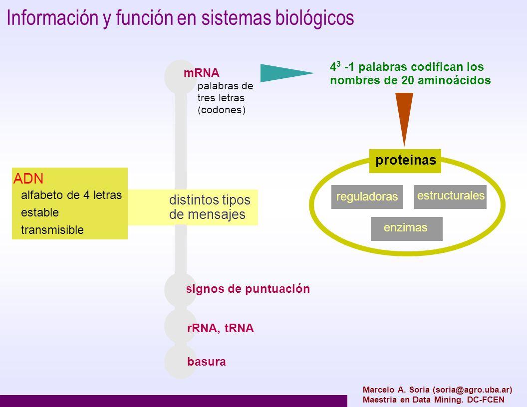 Información y función en sistemas biológicos ADN alfabeto de 4 letras estable transmisible distintos tipos de mensajes palabras de tres letras (codone