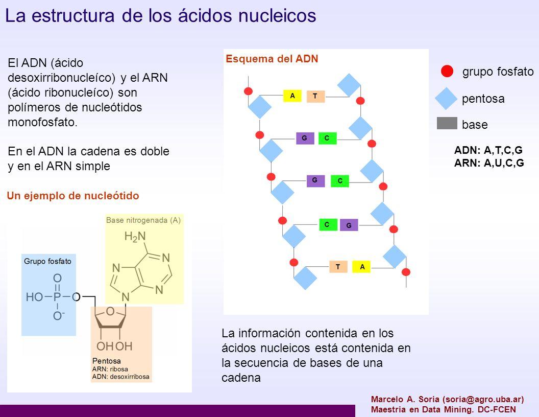 Marcelo A. Soria (soria@agro.uba.ar) Maestria en Data Mining. DC-FCEN El ADN (ácido desoxirribonucleíco) y el ARN (ácido ribonucleíco) son polímeros d