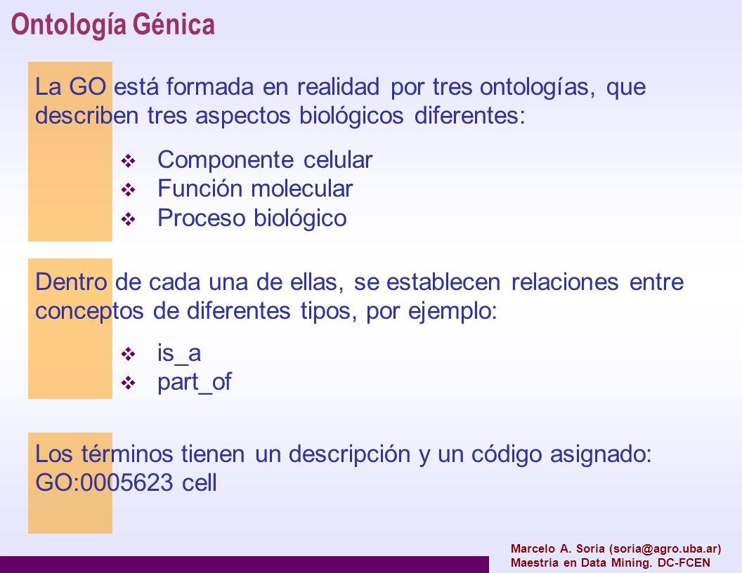 Ontología Génica Marcelo A. Soria (soria@agro.uba.ar) Maestria en Data Mining. DC-FCEN La GO está formada en realidad por tres ontologías, que describ