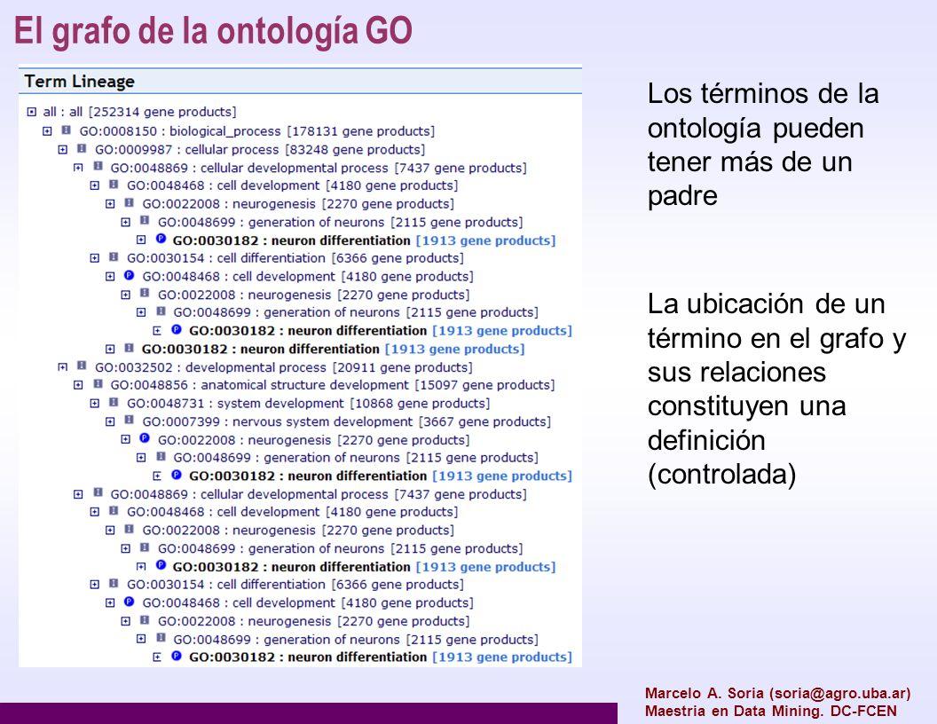 Las relaciones dentro de la ontología GO Otras ontologías pueden definir otras relaciones, y propiedades específicas de las relaciones (simetría, antisimetría, reflexividad, etc) Marcelo A.