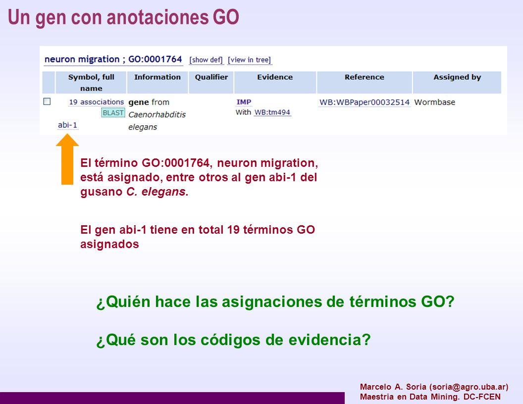Un gen con anotaciones GO Marcelo A. Soria (soria@agro.uba.ar) Maestria en Data Mining. DC-FCEN El término GO:0001764, neuron migration, está asignado
