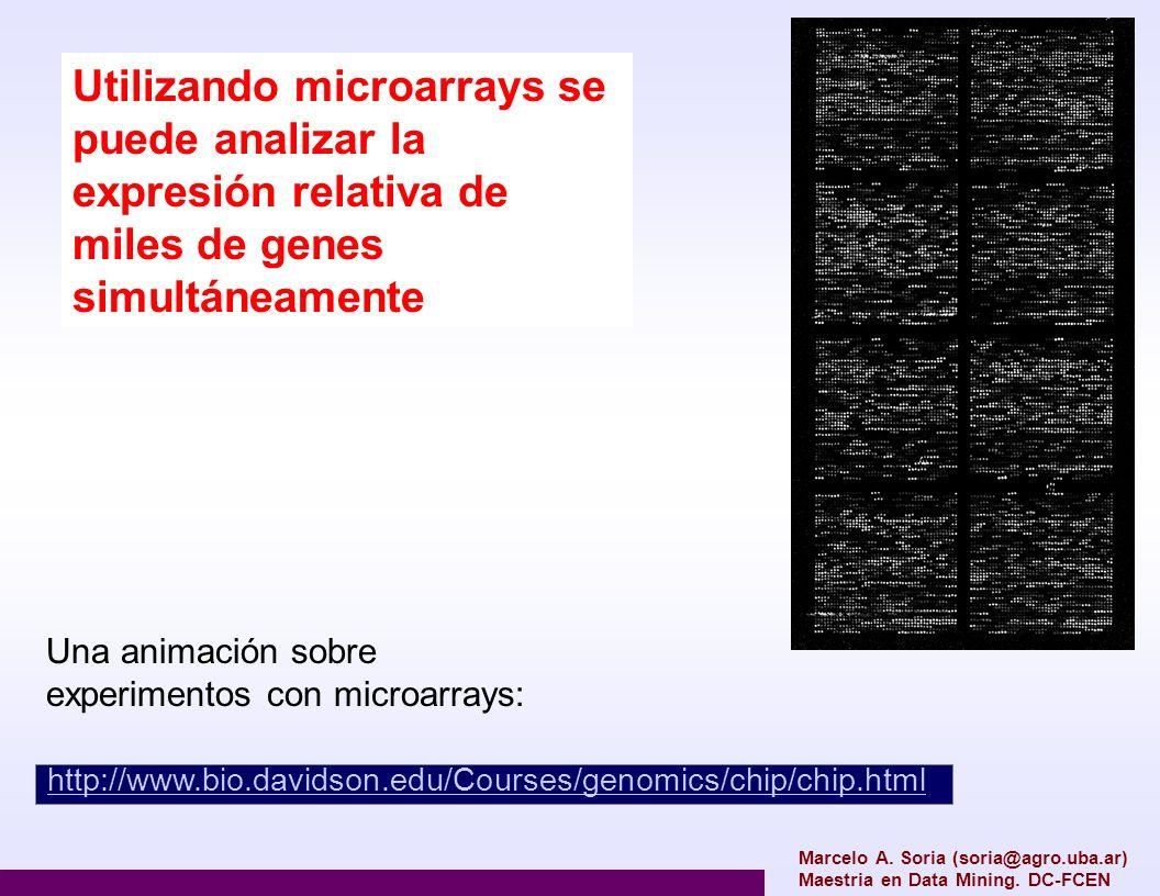 Marcelo A. Soria (soria@agro.uba.ar) Maestria en Data Mining. DC-FCEN Utilizando microarrays se puede analizar la expresión relativa de miles de genes