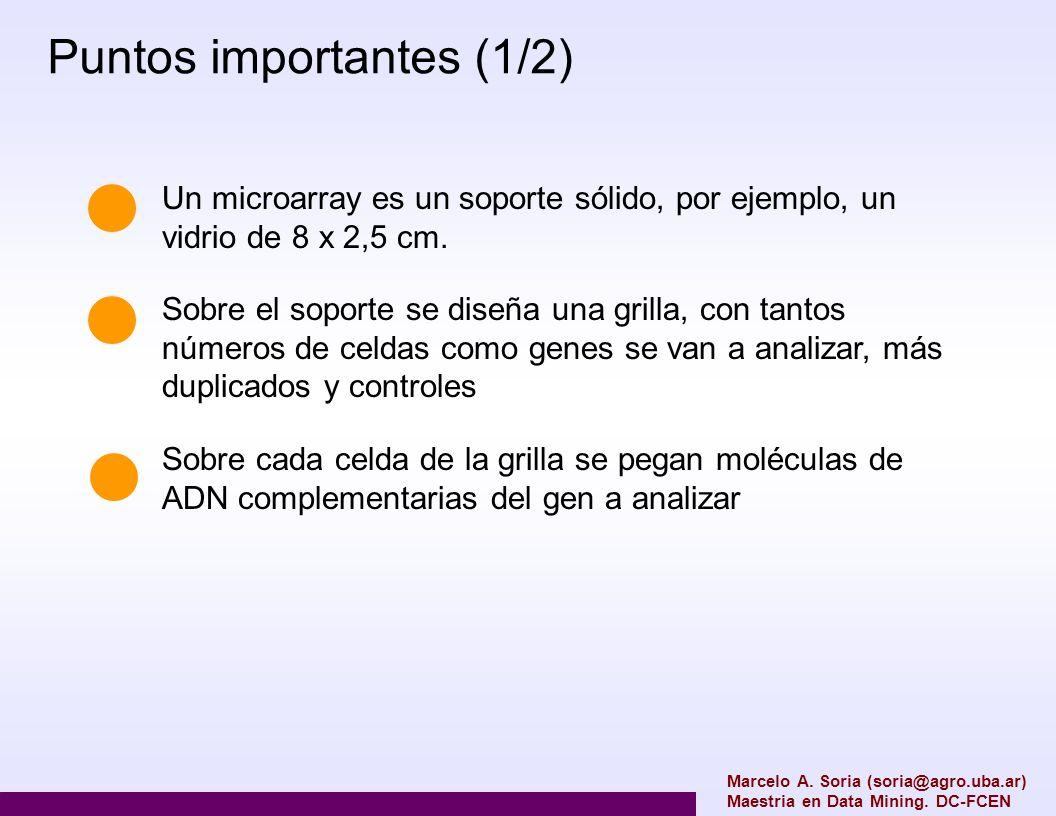 normalización A veces es necesario corregir diferencias de intensidad que varían espacialmente sobre el microarray, en ese caso se pueden aplicar regresiones Loess bidimensionales La causa de esto son las diferencias entre bloques de spots Marcelo A.