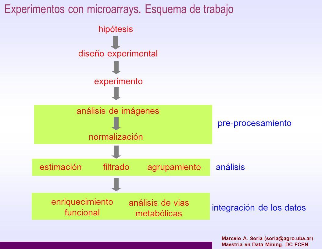 Experimentos con microarrays. Esquema de trabajo hipótesis diseño experimental experimento análisis de imágenes normalización pre-procesamiento anális
